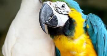A alimentação do Papagaio