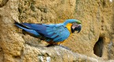 A gaiola ideal para o seu papagaio