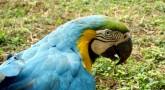 Adoptar um Papagaio
