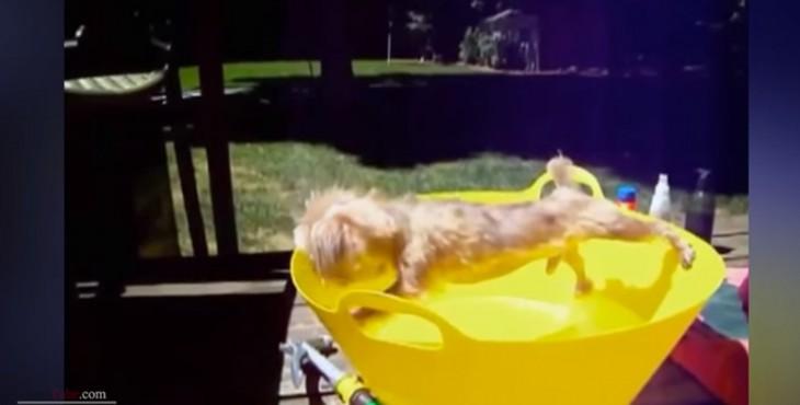 Vídeo do Dia: Os melhores momentos do reino animal